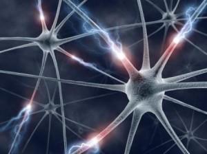 meditacao-neuronios-300x224